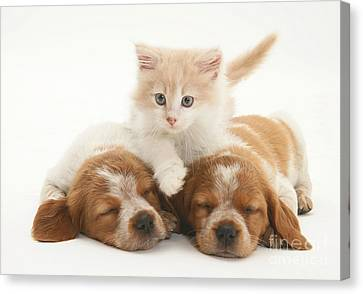 Kitten And Puppies Canvas Print by Jane Burton