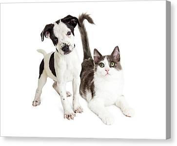Kitten And Puppy Together Canvas Print by Susan Schmitz