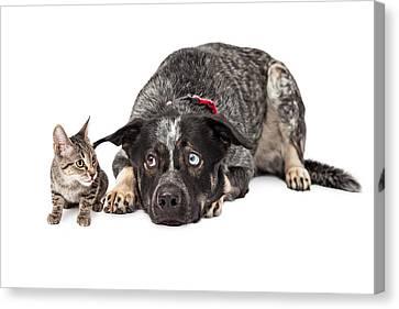 Annoying Canvas Print - Kitten Annoying Patient Dog by Susan Schmitz