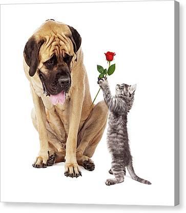 Kitten Handing Big Dog A Rose Flower Canvas Print by Susan Schmitz