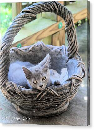 Kitten In A Basket Canvas Print