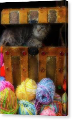 Kitten In A Box With Yarn Canvas Print by Garry Gay