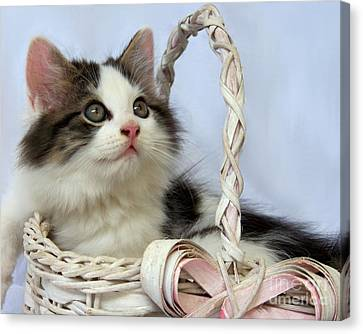Kitten In Basket Canvas Print by Jai Johnson