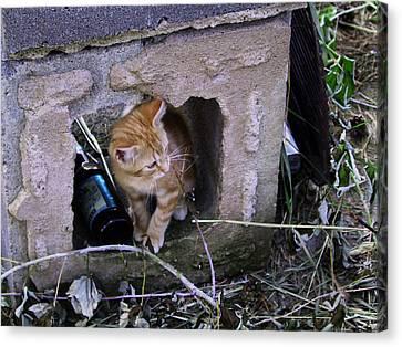 Kitten In The Junk Yard Canvas Print