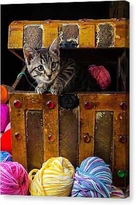 Kitten In Treasure Box Canvas Print by Garry Gay
