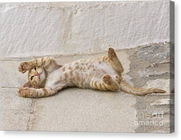 Laying On Stomach Canvas Print - Kitten Playing, Greece by Jean-Louis Klein & Marie-Luce Hubert