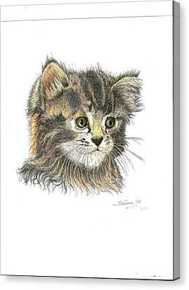 Kitten Canvas Print by Bill Hubbard