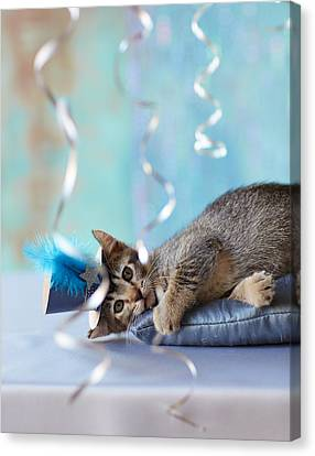 Kitten Wearing A Party Hat Lying Canvas Print