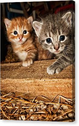 Kittens Canvas Print