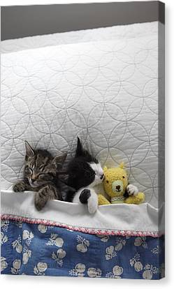 Animal Quilts Canvas Print - Kittens In Bed With Toy by Gillham Studios