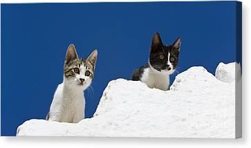 Litter Mates Canvas Print - Kittens On A Greek Island by Jean-Louis Klein & Marie-Luce Hubert