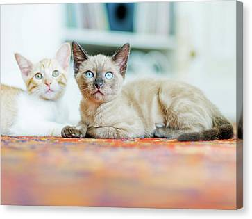 Kitties Sisters Canvas Print