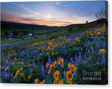 Kittitas Spring Sunset Canvas Print by Mike Dawson