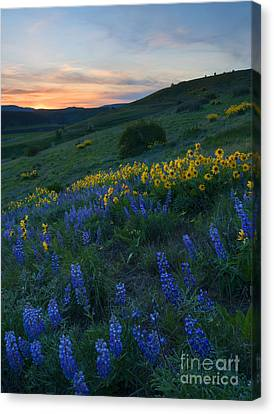 Kittitas Wildflower Sunset Canvas Print by Mike Dawson