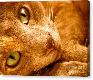 Kitty Canvas Print by Amanda Barcon