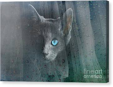 Kitty At The Window Canvas Print