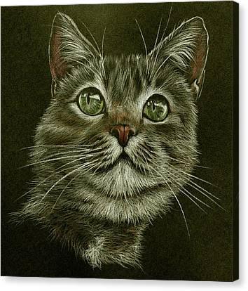 Kitty Cat Canvas Print by Heidi Kriel