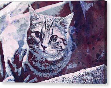 Kitty Cat Canvas Print by Jutta Maria Pusl