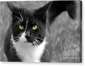 Canvas Print featuring the photograph Kitty Fallowing by Lila Fisher-Wenzel