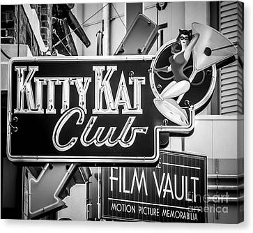 Kitty Kat Canvas Print by Perry Webster