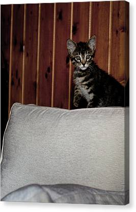 Canvas Print featuring the photograph Kitty by Laura Melis