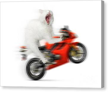 Kitty On A Motorcycle Doing A Wheelie Canvas Print by Oleksiy Maksymenko