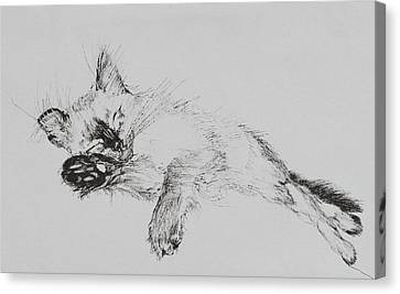 Catnap Canvas Print - Kitty by Vincent Alexander Booth