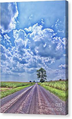 Knowing The Right Way Canvas Print by Cathy  Beharriell