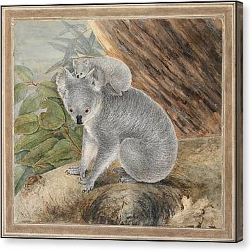 Koala And Young Canvas Print by MotionAge Designs