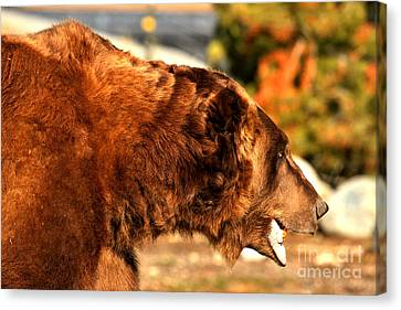 Kodiak Closeup Canvas Print