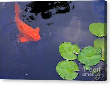 Koi And Lily Pads Canvas Print by Mary Deal