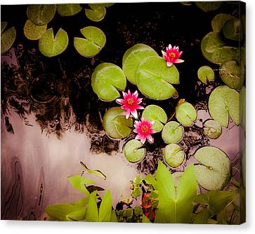 Koi Pond With Water Lilies Canvas Print by Heidi Hermes