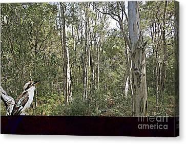 Kookaburra Amongst The Gum Trees.  Canvas Print by Geoff Childs