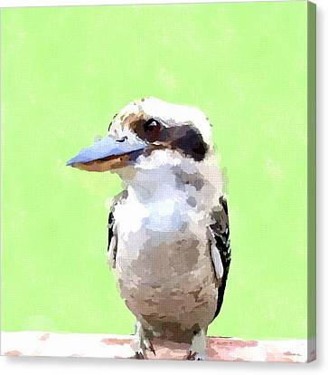 Kookaburra Canvas Print by Chris Butler