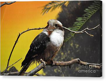Canvas Print featuring the photograph Kookaburra by John Black