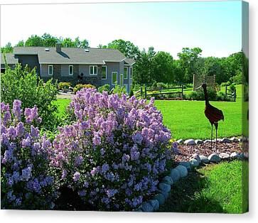 Korean Lilacs And Sandhill Crane Canvas Print by Randy Rosenberger