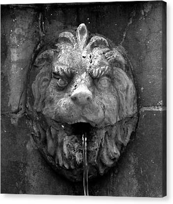 Koreshans Lion Canvas Print by David Lee Thompson