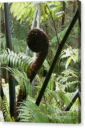 Koru New Zealand Fern Frond  Canvas Print