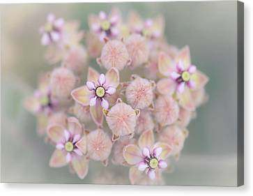 Canvas Print featuring the photograph Kotolo Flowers by Alexander Kunz