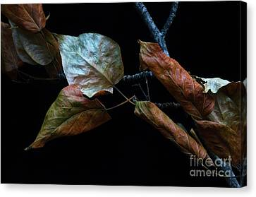 Crinkled Leaves 1 Canvas Print