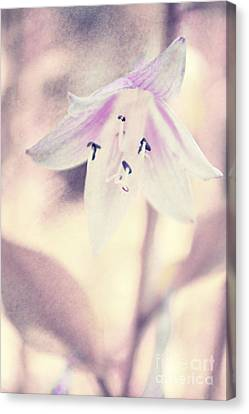 La Belleza Canvas Print by Angela Doelling AD DESIGN Photo and PhotoArt