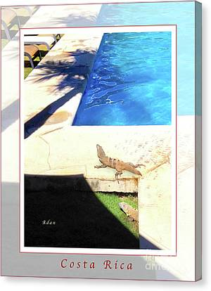 la Casita Playa Hermosa Puntarenas Costa Rica - Iguanas Poolside Greeting Card Poster Canvas Print