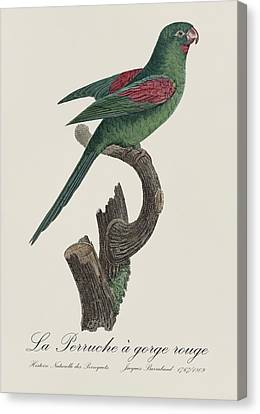La Perruche A Gorge Rouge - Restored 19th Century Parakeet Illustration By Jacques Barraband Canvas Print by Jose Elias - Sofia Pereira