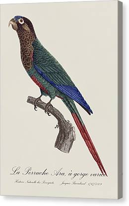 La Perruche Ara, A Gorge Variee - Restored 19th Century Parakeet Illustration By Jacques Barraband Canvas Print by Jose Elias - Sofia Pereira