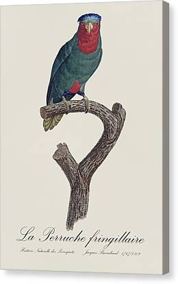 La Perruche Fringillaire - Restored 19th Century Parakeet Illustration By Jacques Barraband  Canvas Print by Jose Elias - Sofia Pereira