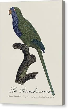 La Perruche Souris / Monk Parakeet- Restored 19th Century Illustration By Jacques Barraband  Canvas Print by Jose Elias - Sofia Pereira