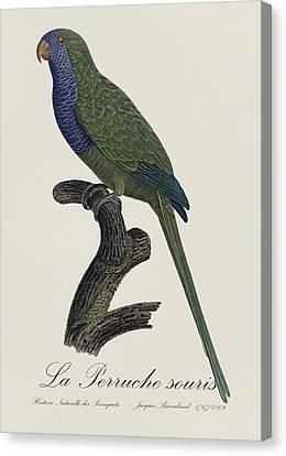 La Perruche Souris / Monk Parakeet- Restored 19th Century Illustration By Jacques Barraband  Canvas Print by Jose Elias - Sofia Pereira
