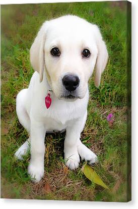Lab Puppy Canvas Print by Stephen Anderson