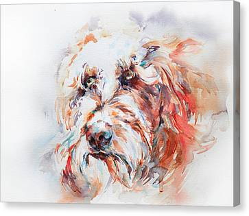 Labradoodle Canvas Print by Stephie Butler