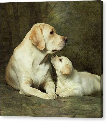 Labrador Dog Breed With Her Puppy Canvas Print